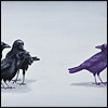 crows bully