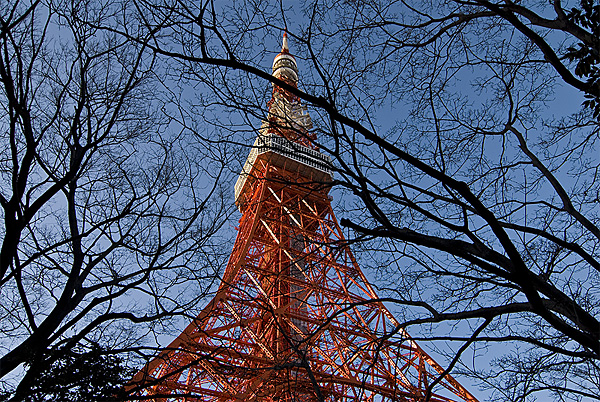 tokyo tower tree branches