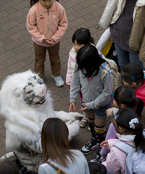 laqua tiger and kids