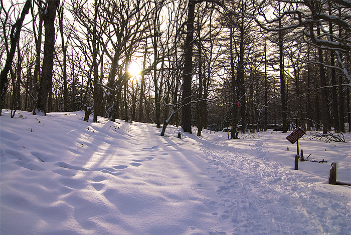 nikko forest hike winter