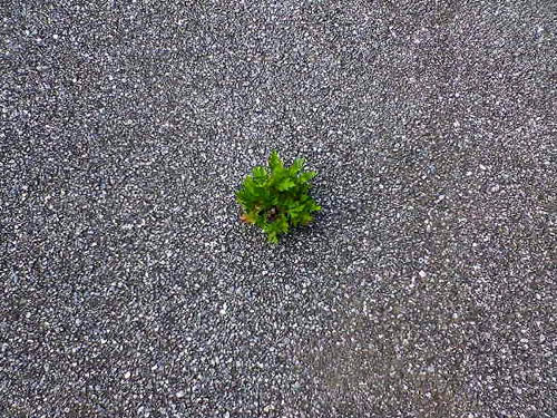 plant growing out of concrete