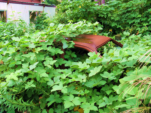 vines eating car haikyo