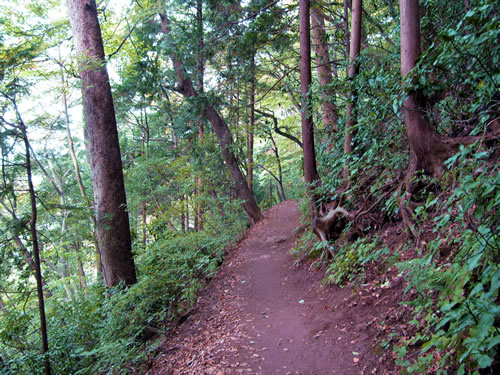 takao hiking trail