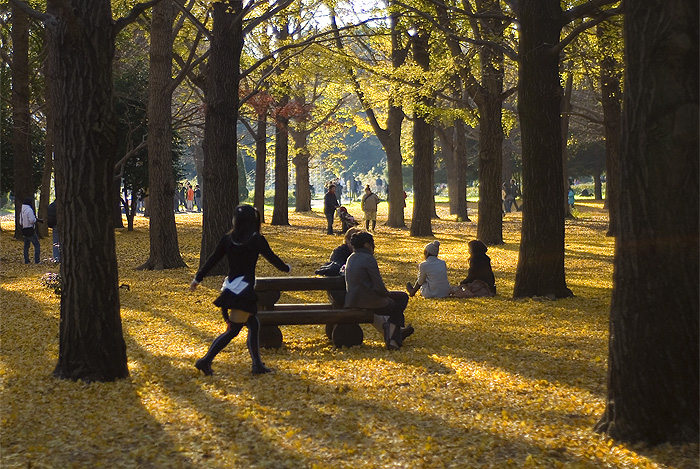 yoyogi park autumn colour